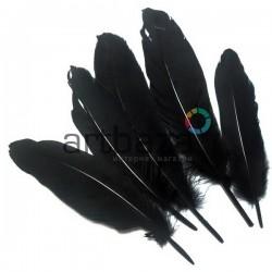 Набор натуральных декоративных перьев, черных, 20 - 23 см., 5 штук, REGINA